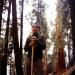 sequoia_401_crop_ob_sat.jpg