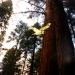 sequoia_510_crop_ob_sat.jpg