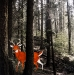 sequoia_512_crop_sat.jpg